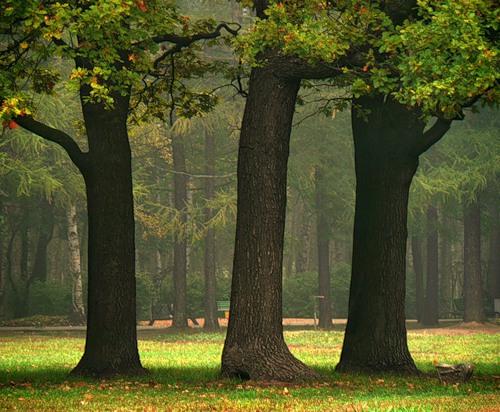 Характеристика пород деревьев: основные параметры, достоинства и недостатки